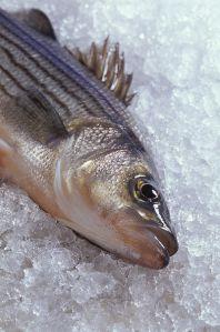 pez ideal